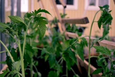 växthus-7
