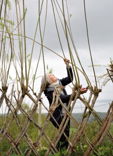 Ingrid Becker klipper av pilkvistar med sekatör. I bakgrunden syns Trondheimsfjorden.
