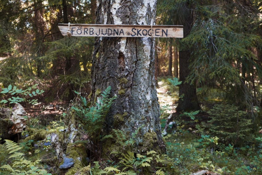"""Ett stort träd med en skylt med texten """"Förbjudna skogen""""."""