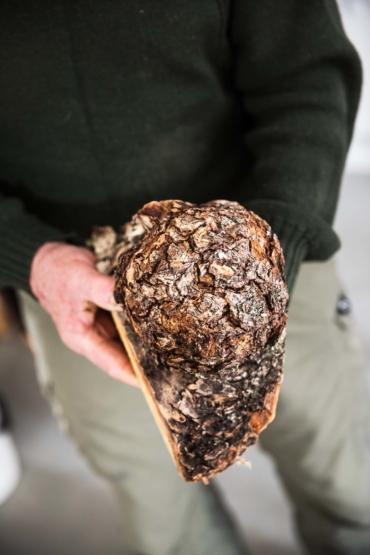 En vril med brun fjällig yta visas fram