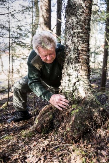 Örjan Falk letar vrilar vid foten av en björk.
